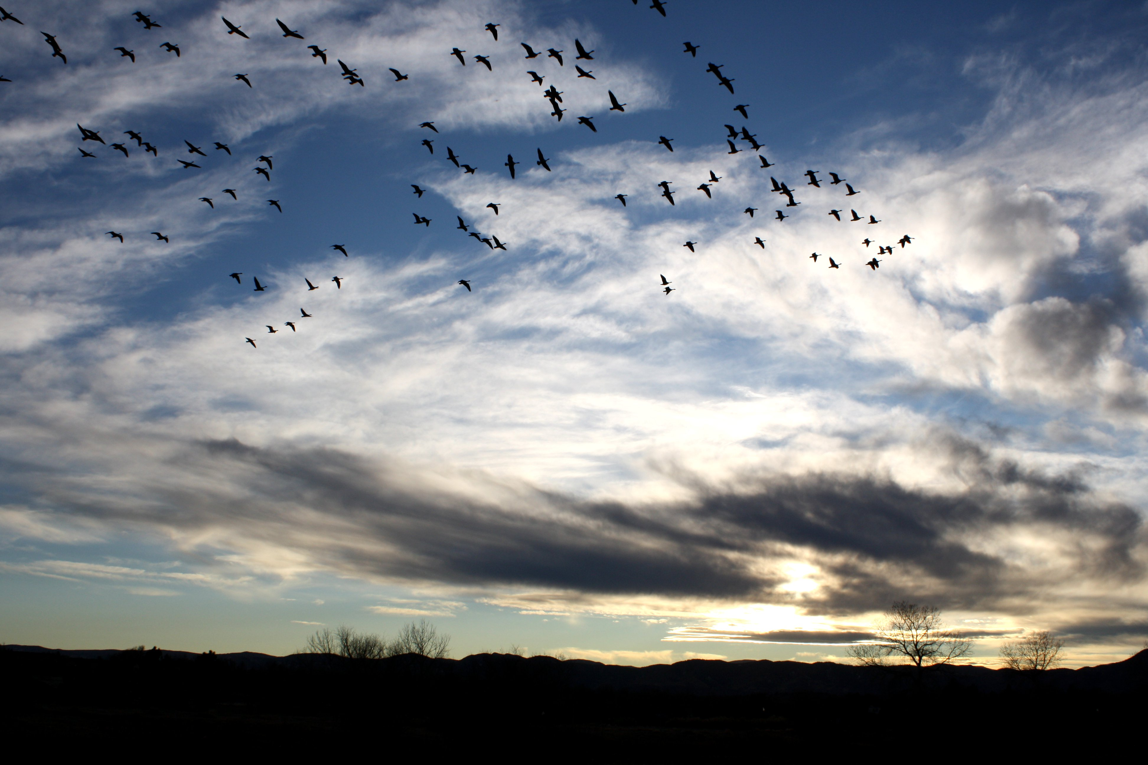 flock-of-birds-in-sky.jpg